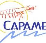 capamex-logo